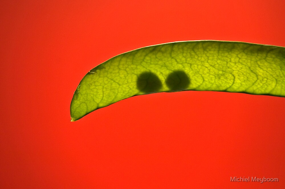 Two peas in a pod by Michiel Meyboom
