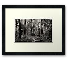 Lonely hut in deep forest Framed Print