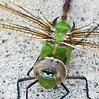 Common Green Darner (iPhone/iPod Case) by April Koehler