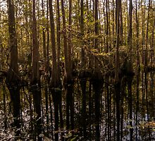 Cypress Swamp by designingjudy