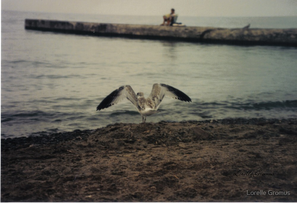 Seagull by Lorelle Gromus