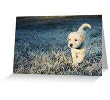 In The Shade Of A Willow Tree. Greeting Card