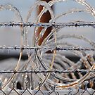 Icy wires by LizzieMorrison