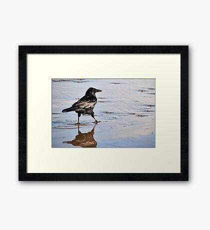 Crow Getting His Feet Wet At Lyme, Dorset UK Framed Print
