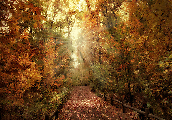 Woodland Light by Jessica Jenney