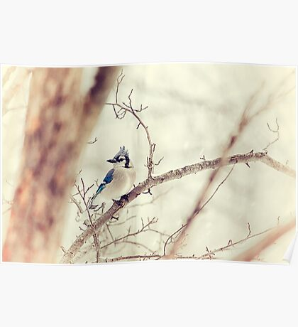 Blue Jay Winter Poster