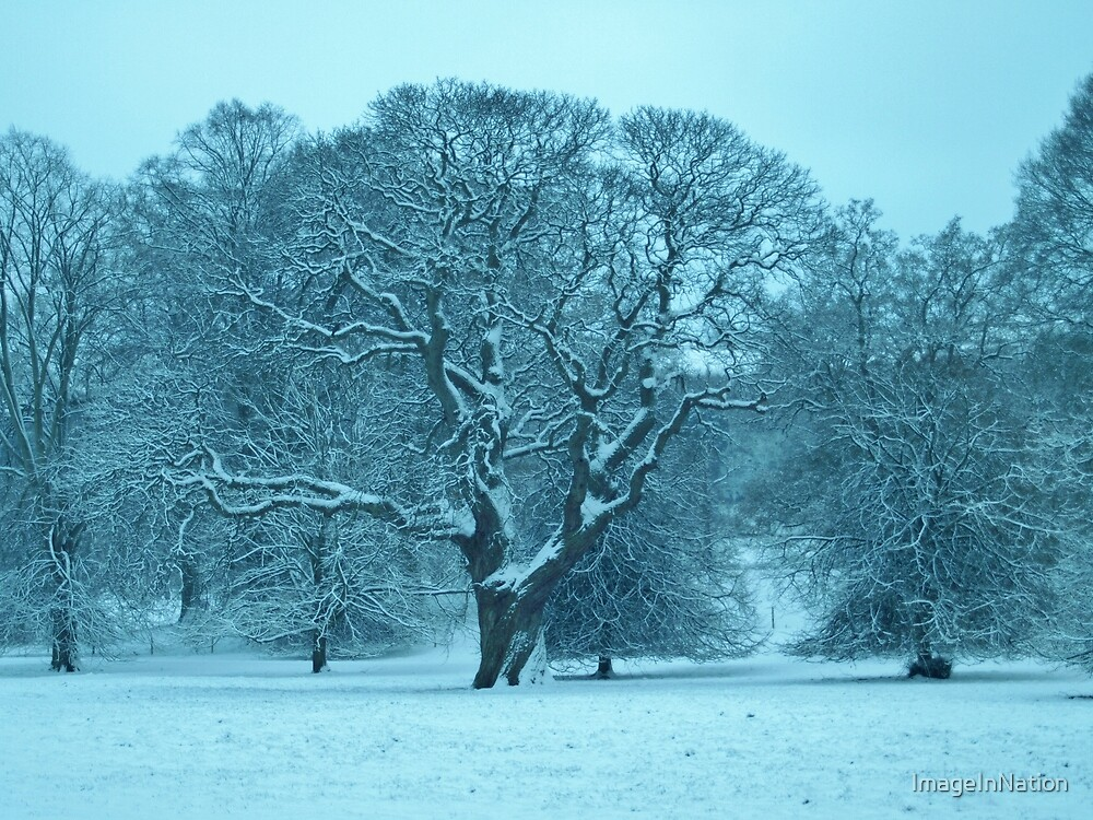 Snow Scene by ImageInNation