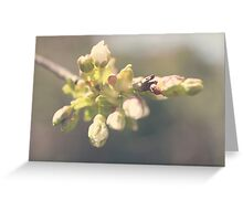 Blossomed cherry Greeting Card