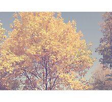 Fall II  Photographic Print