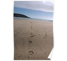 Dog pawprints in sand on beach, Salcombe, Devon, United Kingdom Poster