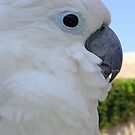 Side Portrait Of A Blue-Eyed Cockatoo by taiche
