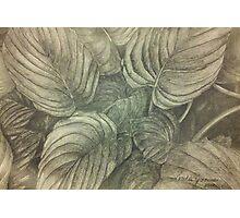 Hasta Plant Photographic Print