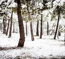 White Forest by Marc Garrido Clotet