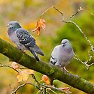 Autumn Pigeons by M.S. Photography/Art