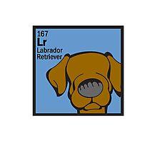 Lab (Chocolate) - The Dog Table Photographic Print