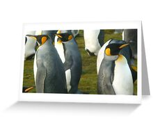 Falkland Island King Penguins Greeting Card