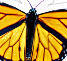 Beautiful Monarch Sticker