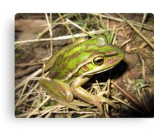 Green and Golden Bell Frog Canvas Print