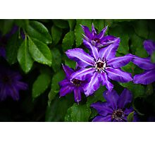 Purple Starburst Photographic Print