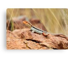 Tawny Rock Dragon Canvas Print