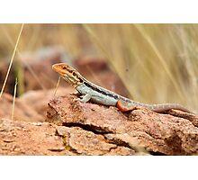 Tawny Rock Dragon Photographic Print