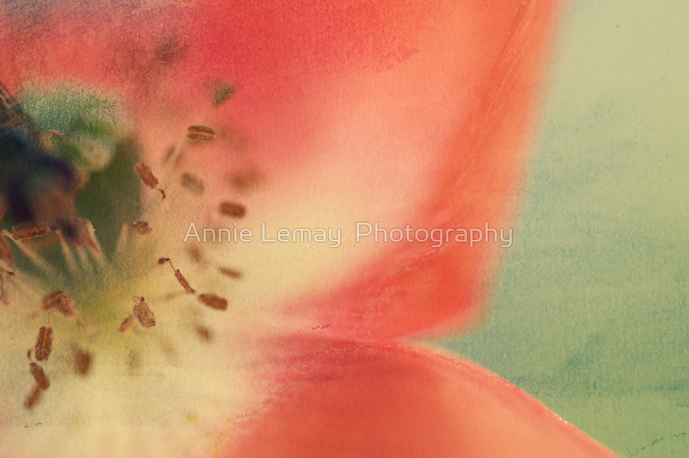 Just Peachy by Annie Lemay  Photography