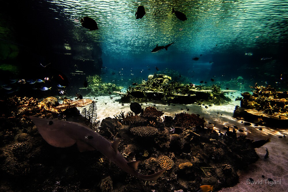 underwater zoo by David Tigani