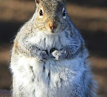 I'm not fat I'm insulating for the winter by Heather King