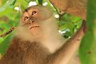 Wild Macaque Monkey - Phra Nang Beach - Railay, Thailand by Honor Kyne
