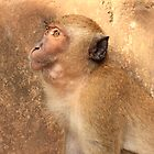 Wild Macaque Monkey - Buddest Temple - Thailand by Honor Kyne