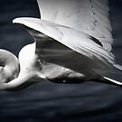 White wings, the wings of an Egret by Lorraine McCarthy by Lozzar Landscape
