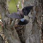 Nest Hover by byronbackyard