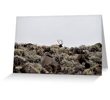 Birch Creek Bull Elk Greeting Card