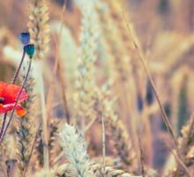 Wild Poppy in the Wheat Field Sticker