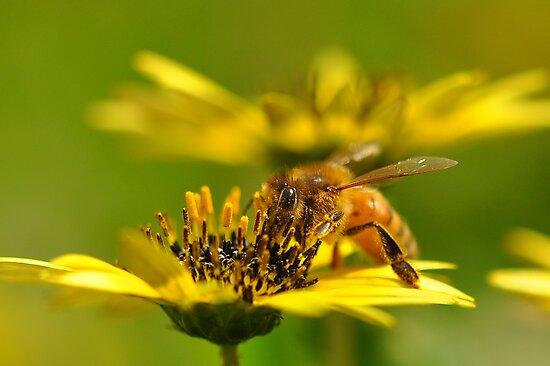 Bee nice! by Edge-of-dreams