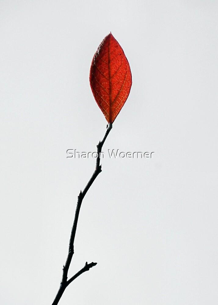 Red Leaf by Sharon Woerner