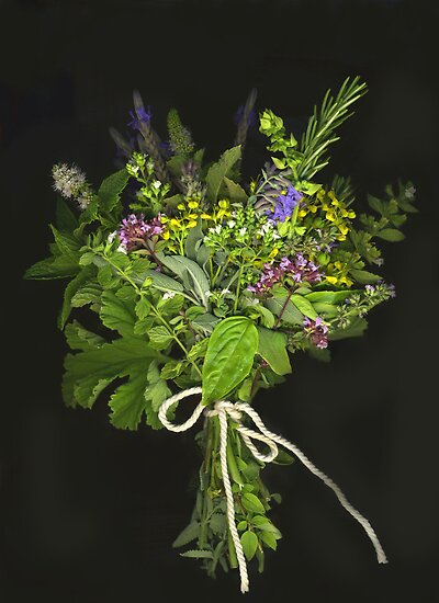 A Handful of Herbs by Barbara Wyeth
