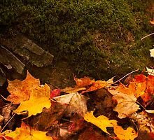 Autumn Leaves Collecting on the forest floor by miketaylor205