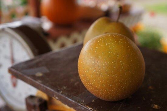 Shiloh Farm Asian Pears by Rainydayphotos