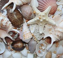 Shell Collection by Robyn Williams