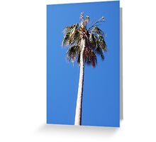 Palm Tree - 14 11 12 Greeting Card