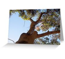 Parrot  - 14 11 12 Greeting Card