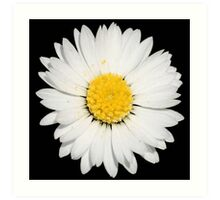 Top View of a White Daisy Isolated on Black Art Print