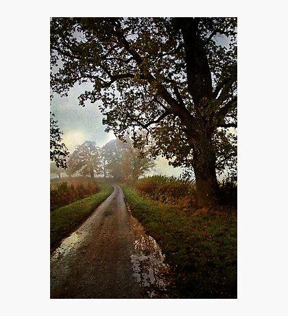 Country Lane Photographic Print