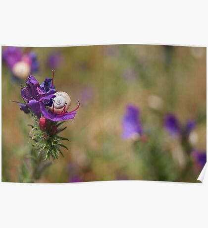 Snail In A Flower Poster