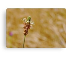 Beauty In Weeds Canvas Print