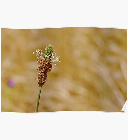 Beauty In Weeds Poster