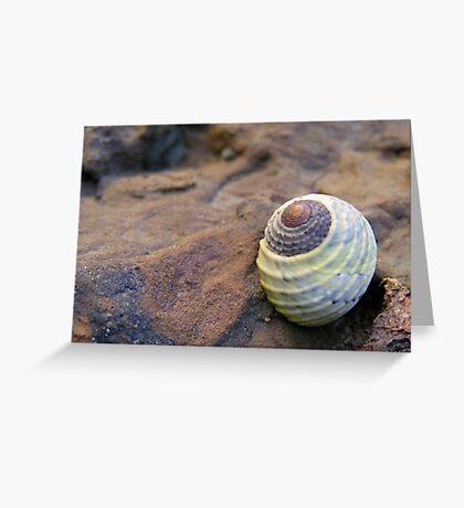 Blue Green Shell Greeting Card