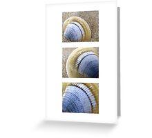 Seashell Trio Greeting Card