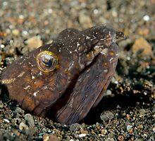 Napolean Snake Eel - Ophichthus bonaparti by Andrew Trevor-Jones